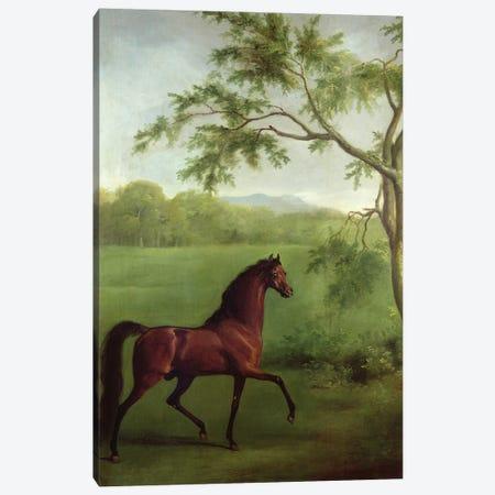 An Arabian Stallion Beneath A Tree, c.1761-63 Canvas Print #BMN11559} by George Stubbs Canvas Artwork