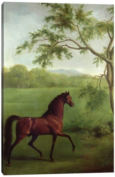 An Arabian Stallion Beneath A Tree, c.1761-63 Canvas Art Print
