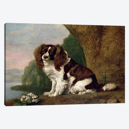 Fanny, A Brown And White Spaniel, 1778 Canvas Print #BMN11562} by George Stubbs Canvas Print