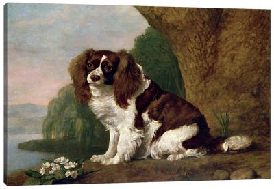 Fanny, A Brown And White Spaniel, 1778 Canvas Art Print