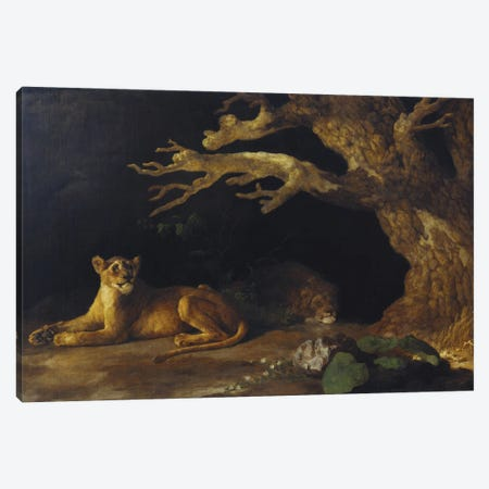 Lion And Lioness Canvas Print #BMN11565} by George Stubbs Canvas Art
