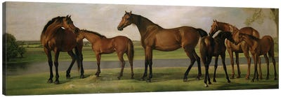 Mares And Foals Disturbed By An Approaching Storm, 1764-66 Canvas Art Print