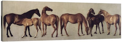 Mares And Foals Without A Background, c.1762 Canvas Art Print