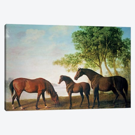 Shafto Mares And A Foal Canvas Print #BMN11576} by George Stubbs Canvas Art Print