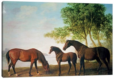 Shafto Mares And A Foal Canvas Art Print