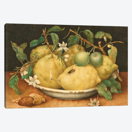 Still Life With Bowl Of Citrons, c.1640-49 Canvas Print #BMN11614} by Giovanna Garzoni Canvas Artwork