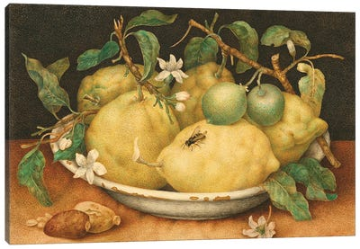Still Life With Bowl Of Citrons, c.1640-49 Canvas Art Print