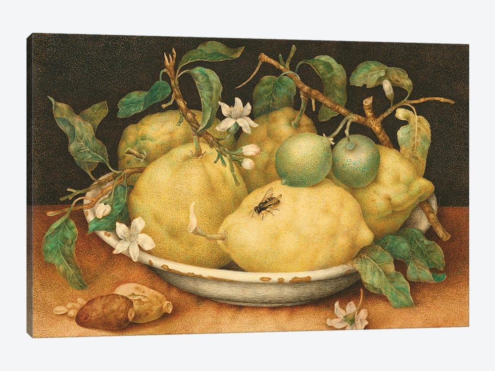 Still Life With Bowl Of Citrons, c.1640-49 by Giovanna Garzoni 1-piece Art Print