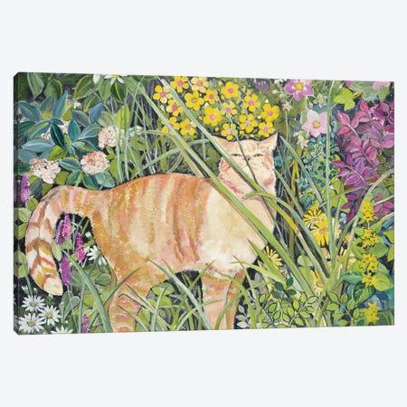 Cat And Long Grass, 1996 Canvas Print #BMN11657} by Hilary Jones Canvas Artwork