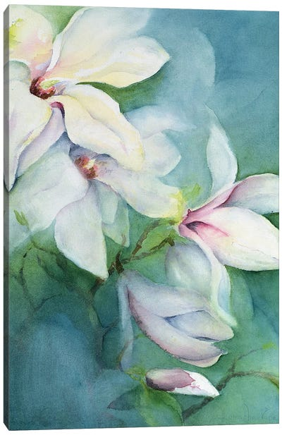 Magnolia Dedudata Canvas Art Print