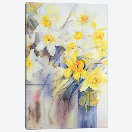 Mixed Daffodils In A Tank Canvas Print #BMN11675} by Karen Armitage Canvas Artwork