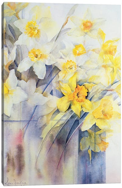Mixed Daffodils In A Tank Canvas Art Print