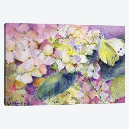 Pale Clouded Yellow Butterfly (Colias Hyale) On Hydrangea Canvas Print #BMN11676} by Karen Armitage Canvas Art