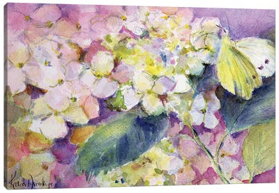 Pale Clouded Yellow Butterfly (Colias Hyale) On Hydrangea Canvas Art Print