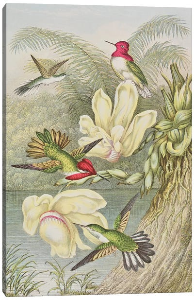 Humming birds among tropical flowers  Canvas Art Print