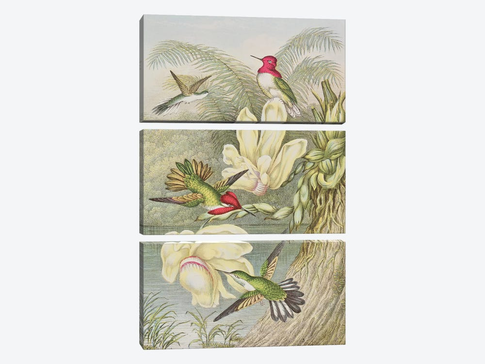 Humming birds among tropical flowers  by English School 3-piece Art Print