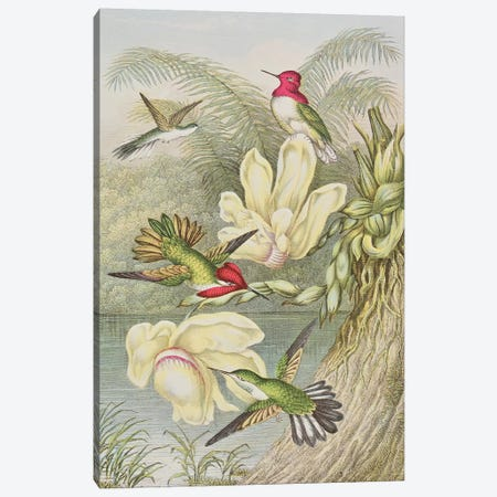 Humming birds among tropical flowers  Canvas Print #BMN1178} by English School Canvas Wall Art