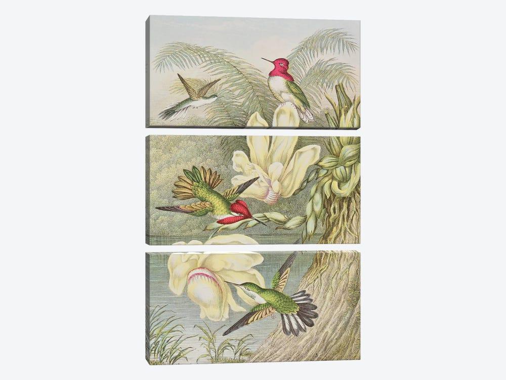 Humming birds among tropical flowers  by English School 3-piece Art Print