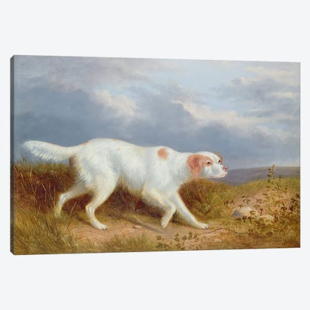 A Setter on the Moor Canvas Print #BMN1251} by Philip Reinagle Canvas Print