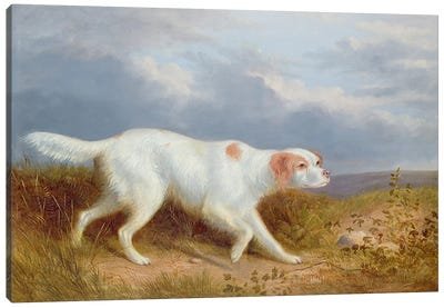 A Setter on the Moor Canvas Art Print