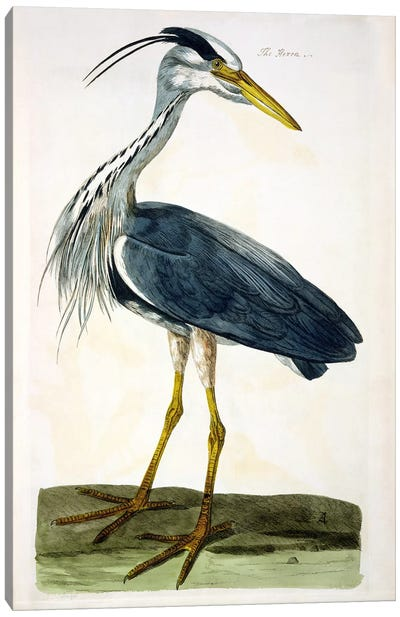 The Heron  Canvas Art Print