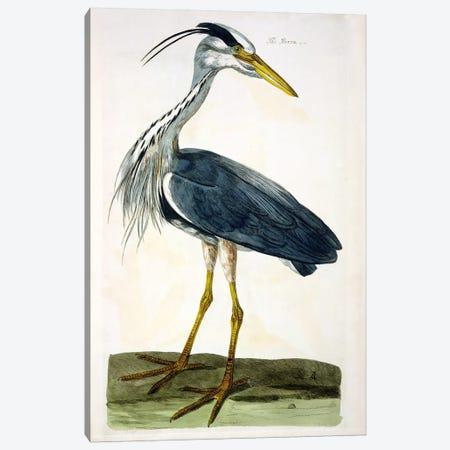 The Heron  Canvas Print #BMN1431} by Peter Paillou Canvas Art Print