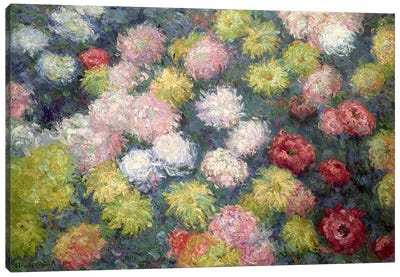 Chrysanthemums, 1897 Canvas Art Print