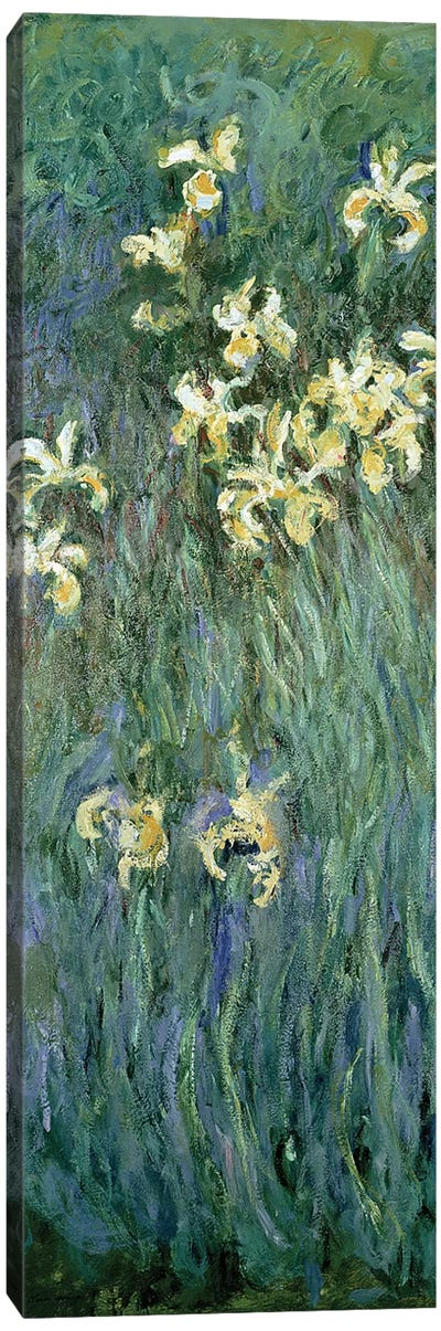 The Yellow Irises  Canvas Art Print