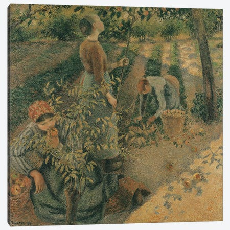 The Apple Pickers, 1886  Canvas Print #BMN1535} by Camille Pissarro Canvas Print