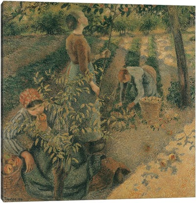 The Apple Pickers, 1886  Canvas Art Print