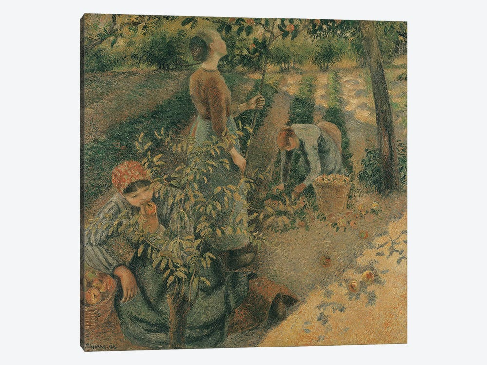The Apple Pickers, 1886  by Camille Pissarro 1-piece Canvas Print