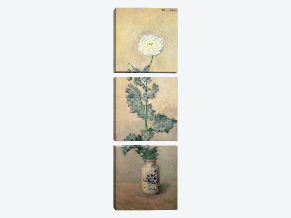 White Poppy, 1883  by Claude Monet 3-piece Canvas Wall Art