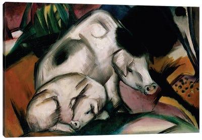 Pigs, c.1912  Canvas Art Print