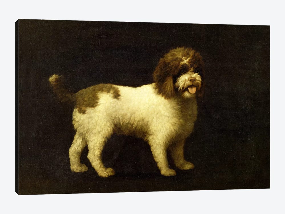 A Water Spaniel, 1769  by George Stubbs 1-piece Canvas Wall Art