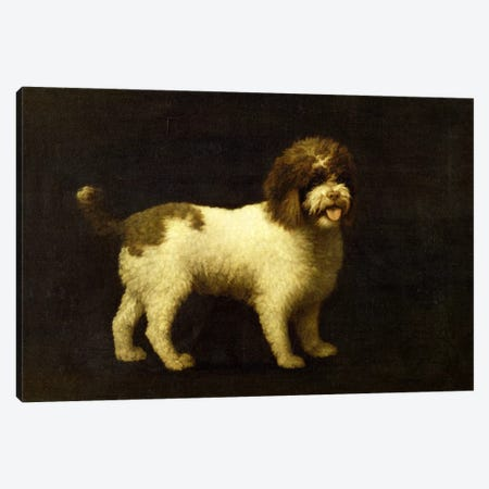 A Water Spaniel, 1769  Canvas Print #BMN1683} by George Stubbs Canvas Artwork