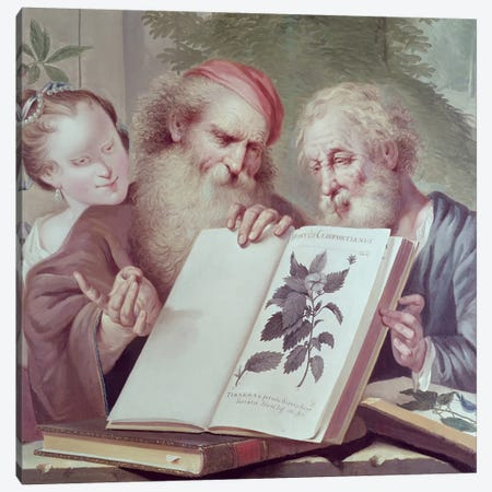 Illustration from Hortus Cliffortianus, by Carl Linnaeus  Canvas Print #BMN193} by Unknown Artist Canvas Art