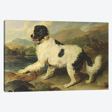 Newfoundland Dog Called Lion, 1824  Canvas Print #BMN1955} by Sir Edwin Landseer Canvas Art Print