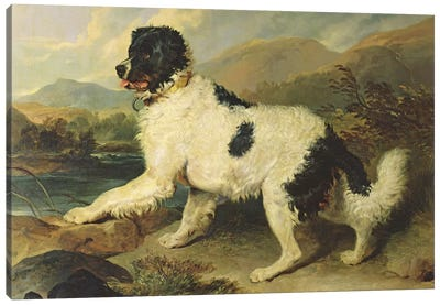 Newfoundland Dog Called Lion, 1824  Canvas Art Print