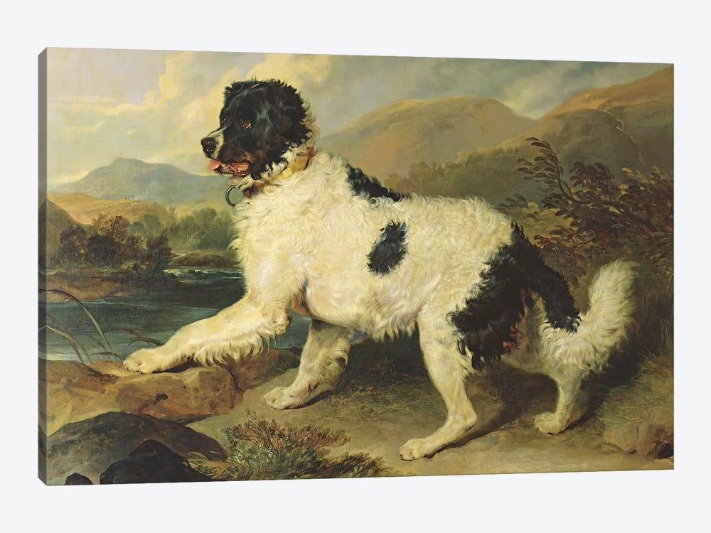 Newfoundland Dog Called Lion, 1824  by Sir Edwin Landseer 1-piece Canvas Print