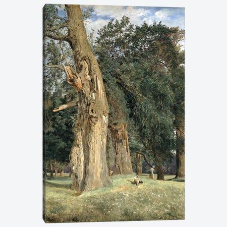 Old elms in Prater, 1831  Canvas Print #BMN1968} by Ferdinand Georg Waldmuller Art Print