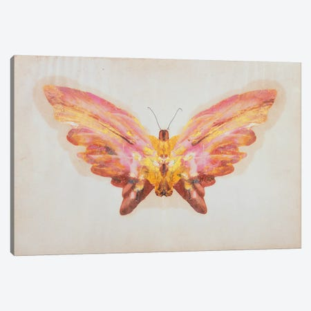 Butterfly  Canvas Print #BMN1974} by Albert Bierstadt Canvas Print