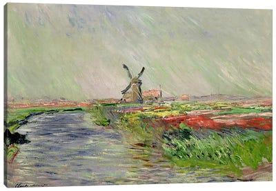 Tulip Field in Holland  Canvas Art Print