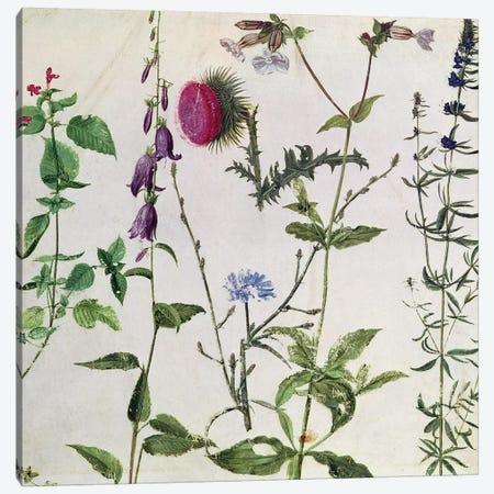 Eight Studies of Wild Flowers  Canvas Print #BMN2002} by Albrecht Dürer Canvas Artwork
