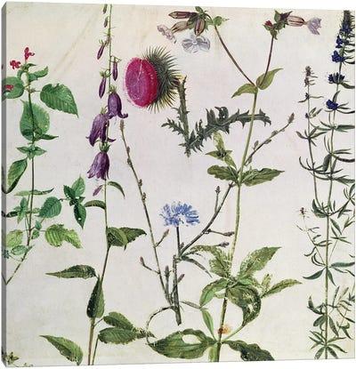 Eight Studies of Wild Flowers  Canvas Art Print