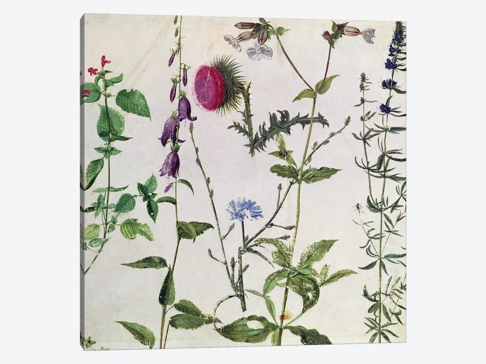 Eight Studies of Wild Flowers  by Albrecht Dürer 1-piece Canvas Print