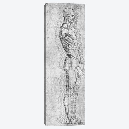 Anatomical Study  Canvas Print #BMN2016} by Leonardo da Vinci Canvas Artwork