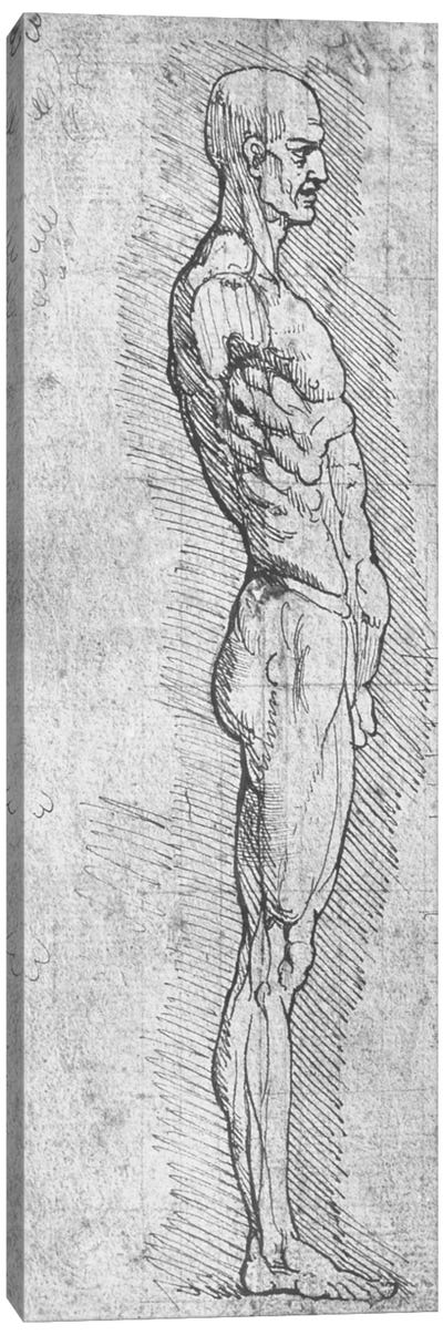 Anatomical Study by Leonardo da Vinci Canvas Artwork