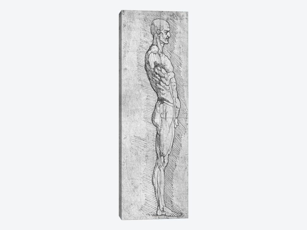 Anatomical Study  by Leonardo da Vinci 1-piece Canvas Art