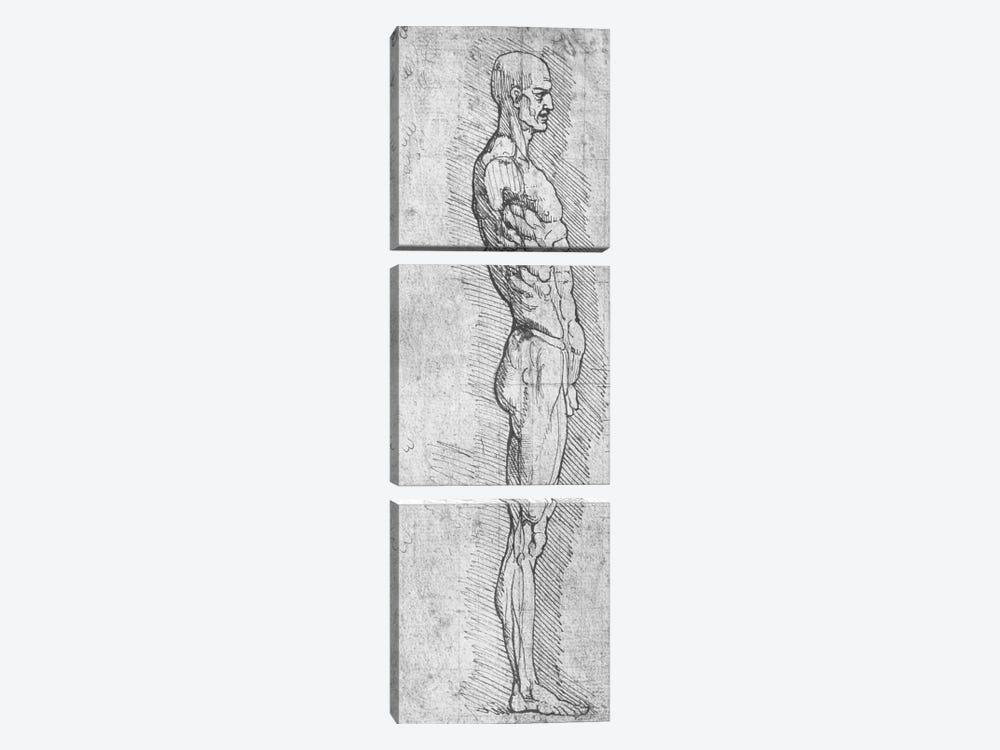 Anatomical Study  by Leonardo da Vinci 3-piece Canvas Artwork