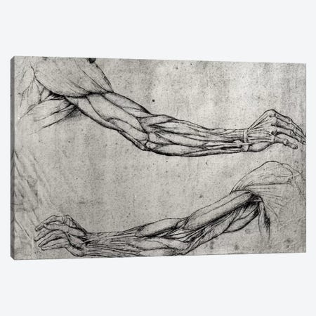 Study of Arms  Canvas Print #BMN2057} by Leonardo da Vinci Canvas Art